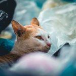 VerpackG : Verbot der Kunststofftragetaschen